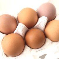 我が家の元気卵の紹介口コミをいただきました!